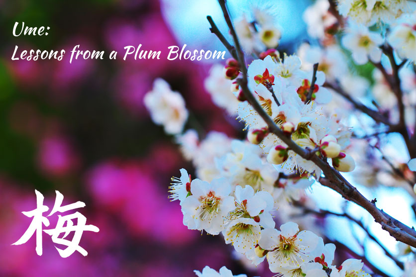 ume - lessons from a plum blossom